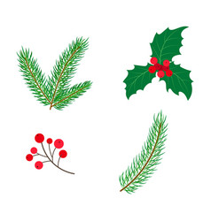 Flat holly spruce leaves branch berry set vector