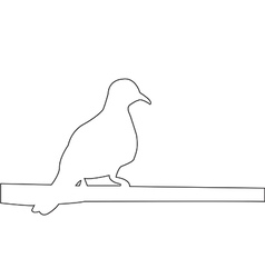 pigeon sits on a pole path on white background vector image