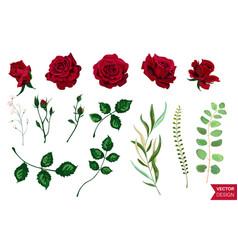 roses wedding invitation card for design 01 vector image