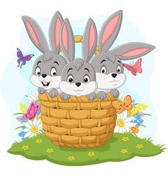 three rabbits cartoon in basket vector image