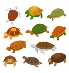 Turtle cartoon seaturtle character swimming vector