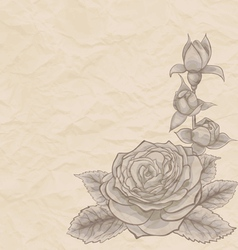 Vintage background Beautiful rose in the corner vector image vector image