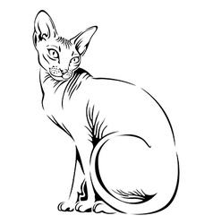 Cat sphynx black vector
