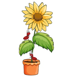 A sunflower with two ants vector