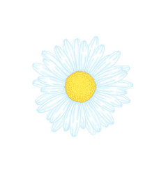 Beautiful daisy flower isolated floral desig vector