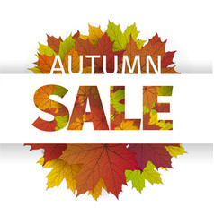 fall sale design autumn discount fall vector image