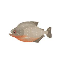 icon of flatfish marine animal sea and ocean vector image