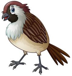 Funny a sparrow bird cartoon vector