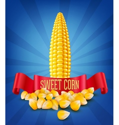 Grains and cobs of corn and red ribbon vector