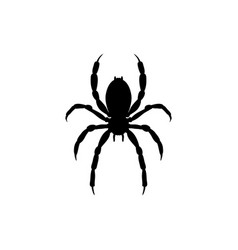 spider insect black silhouette animal vector image