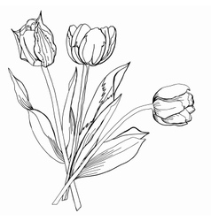 TulipSketch Black and White vector image vector image
