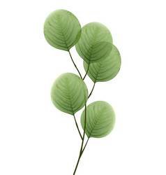 tree branch with leaves eco decorative element vector image