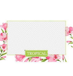 Cover design transparent product package window vector