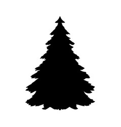 Silhouette spruce tree coniferous flora icon vector