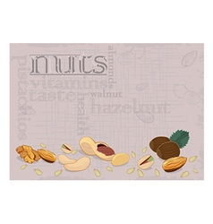 nuts background vector image vector image