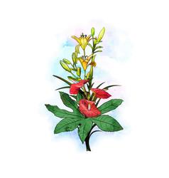 bouquet flowers water color vector image