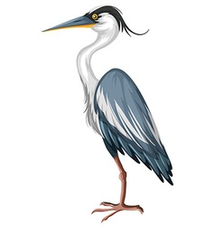 Crane with gray feather vector image