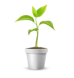 green sprout in pot vector image