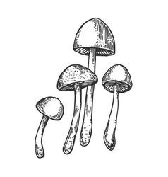 Narcotic mushroom engraving vector
