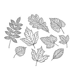 set leaves nature foliage sketch decorative vector image