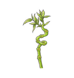 bamboo green stalk with leaves in sketch style vector image