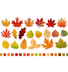 Different color autumn leaves collection leaves vector