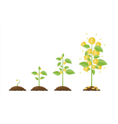 growing money tree stages of vector image