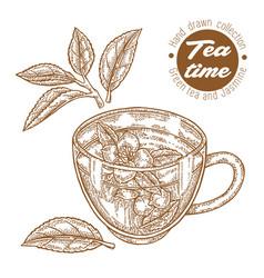 Hand drawn cup tea green tea and jasmine vector