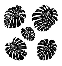 Monstera leaf outline black silhouettes tropical vector