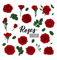 set collection red roses and leaves realistic vector image