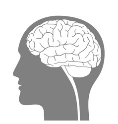 silhouette man with brain vector image