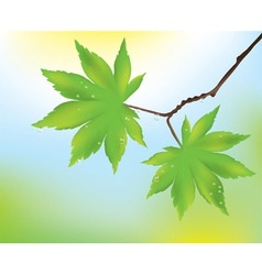 maple leaves and rain drops vector image
