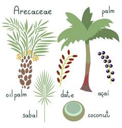 arecaceae plants set vector image