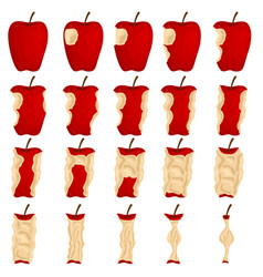cartoon color stages of eating apple icons set vector image