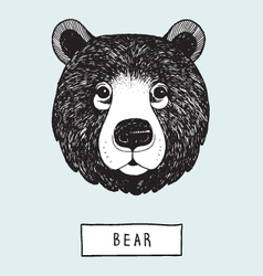 Drawing Bear Head vector