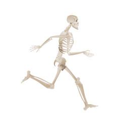 Human skeleton running forward in full motion vector