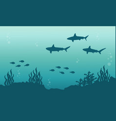 Silhouette of shark and fish underwater landscape vector