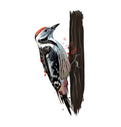 woodpecker from a splash watercolor colored vector image
