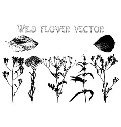 Silhouettes of wild flowers and leaves vector image vector image