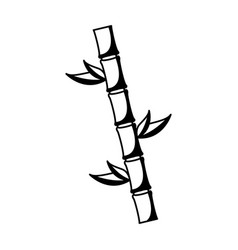 bamboo plant isolated icon vector image