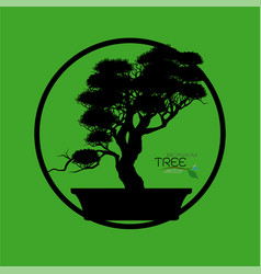 bonsai tree vector image