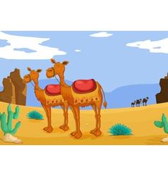 Camels in desert vector
