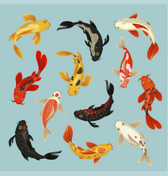 Koi fish beautiful swim oriental pattern design vector