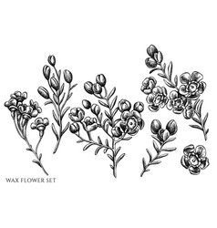 Set hand drawn black and white wax vector