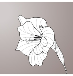 Flower gladiolus Contour graphic art vector image