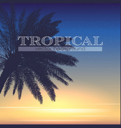 palm tree at tropical coast silhouette palm on vector image