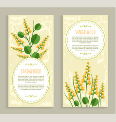sandalwood cards collection vector image