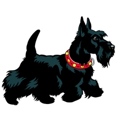 scottish terrier vector image