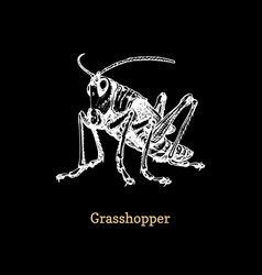 a grasshopper on black background vector image