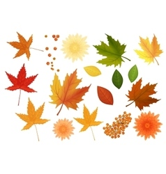Beautiful colourful realistic autumn leaves and vector